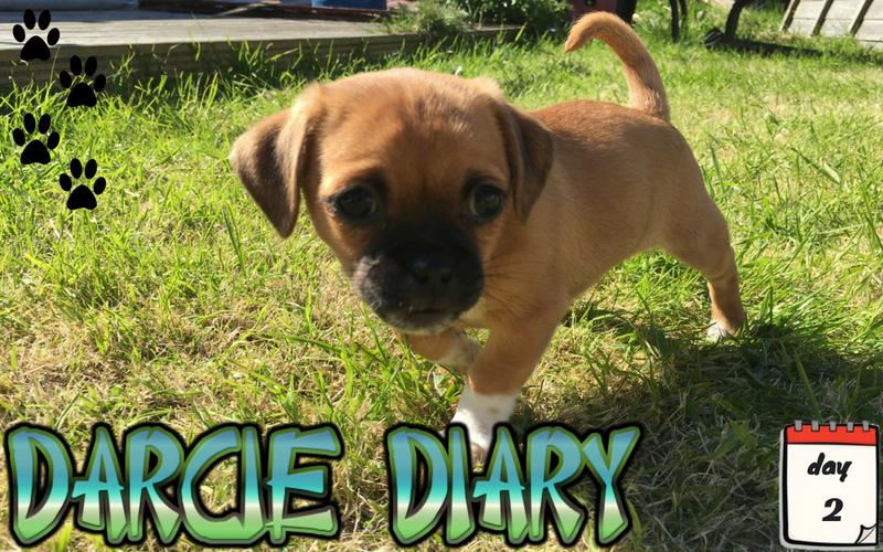 Darcie Diary – Day 2
