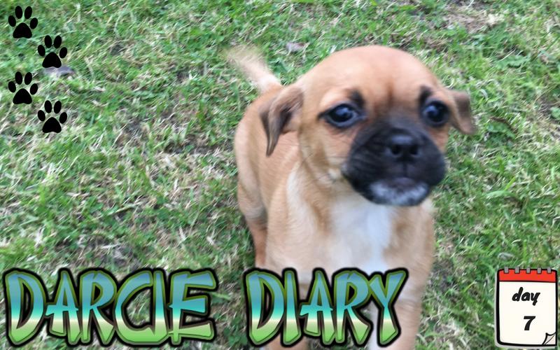 Darcie Diary – Day 7