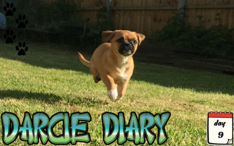 Darcie Diary – Day 9