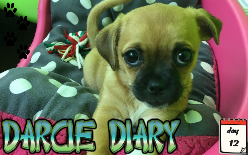 Darcie Diary – Day 12